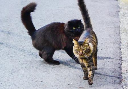 ウチの猫達.jpg