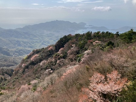 四方指大観峰の山桜_21.04.03.JPG