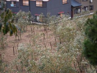 healthy land 001_R.JPG