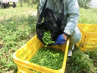 olive&sennmaida 041_R.jpg