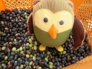 olivepartner 064_R.jpg